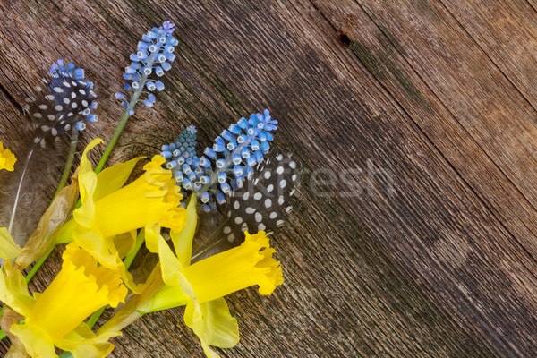 Narcissen eieren narcis Blauw gele bloemen veren Stockfoto © neirfy