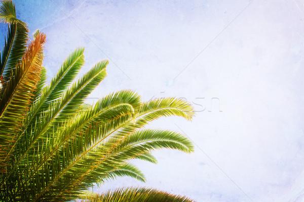 Pálmafa kék levelek kék ég retro tájkép Stock fotó © neirfy