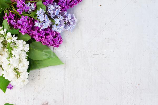 свежие сирень цветы белый Сток-фото © neirfy