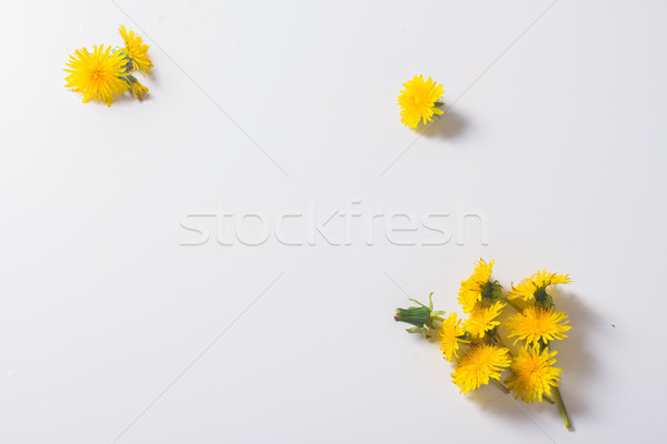 Dandelions flat lay scene Stock photo © neirfy