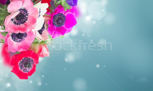Stock photo: Anemones on white