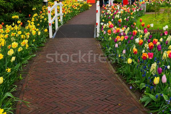 Foto stock: Pedra · andar · maneira · jardim · primavera