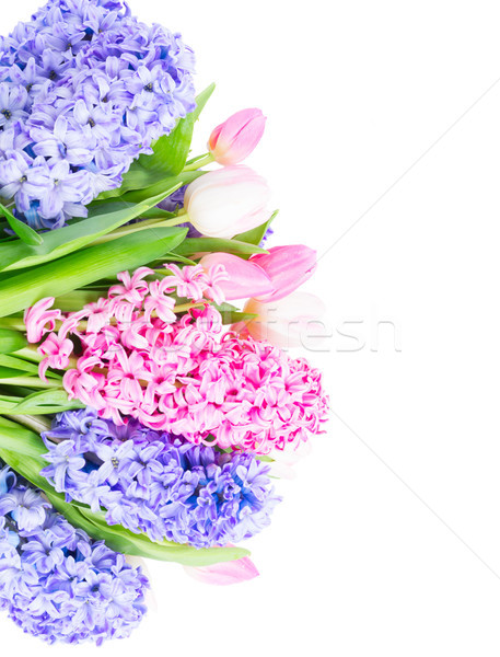 Hyacint vers bloemen roze Blauw tulp Stockfoto © neirfy