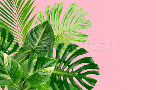 Tropicales feuilles vertes cadre rose bannière espace de copie Photo stock © neirfy