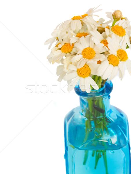 daisy flowers posy close up Stock photo © neirfy