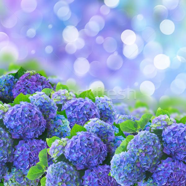 Blauw bloemen ion bokeh tuin bloem Stockfoto © neirfy