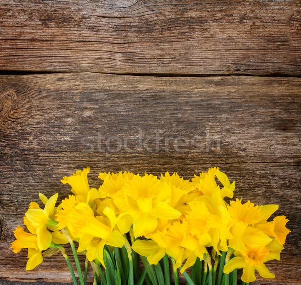 Narcissen houten bos vers voorjaar Geel Stockfoto © neirfy
