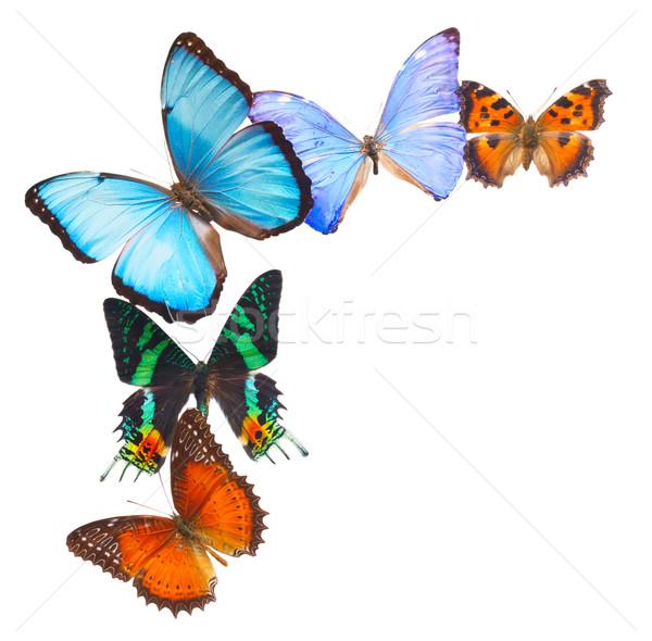 Foto stock: Quadro · isolado · branco · primavera · borboleta