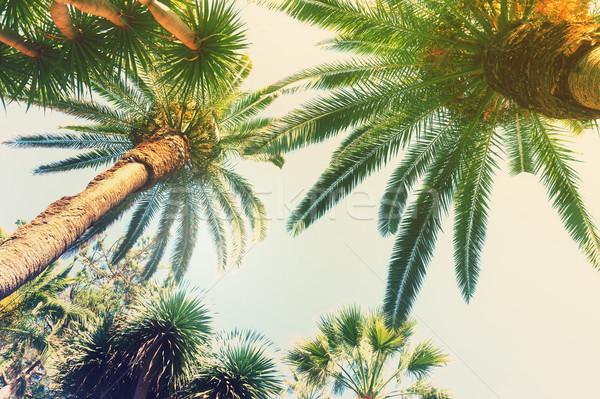 Palmeira tropical palmeiras céu retro sol Foto stock © neirfy