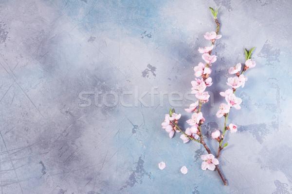 Pembe kiraz çiçeği iki kiraz çiçekler Stok fotoğraf © neirfy