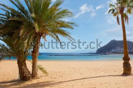 Praia tenerife palms dourado Espanha água Foto stock © neirfy
