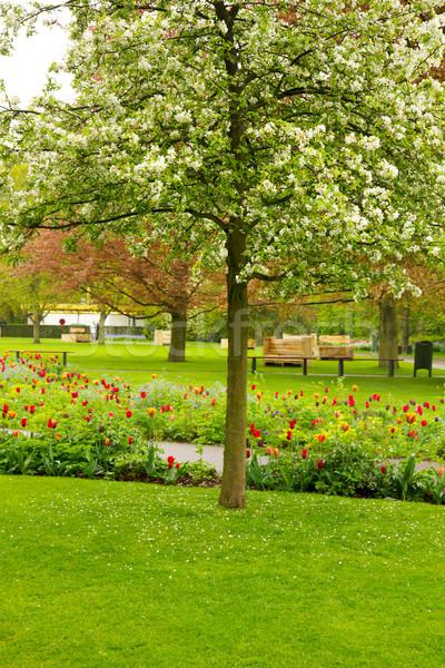 Wiosną drzewo ogród zielone kwiat Zdjęcia stock © neirfy