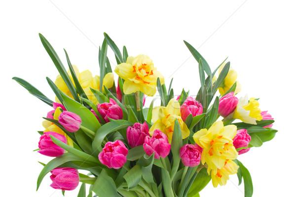 розовый тюльпаны желтый нарциссов изолированный Сток-фото © neirfy