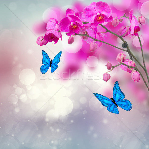 violet orchid flowers with butterflies Stock photo © neirfy