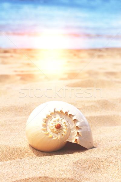 Tenger kagyló homok tengerpart víz perem Stock fotó © neirfy