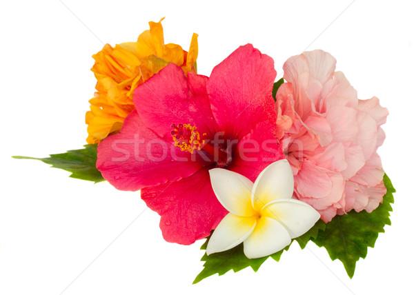 Renkli ebegümeci çiçekler yalıtılmış beyaz sevmek Stok fotoğraf © neirfy