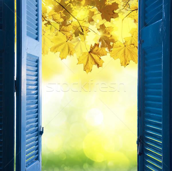 window to fall garden Stock photo © neirfy