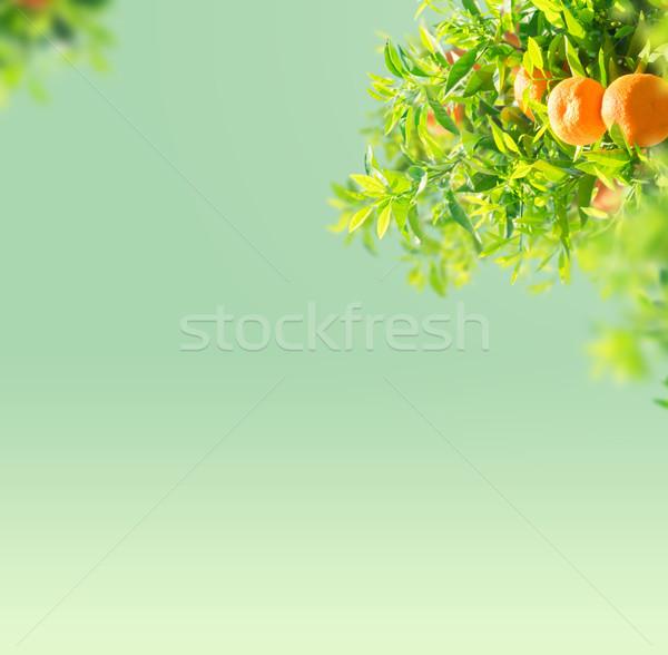 Narancsfa kert ágak kék ég copy space fa Stock fotó © neirfy