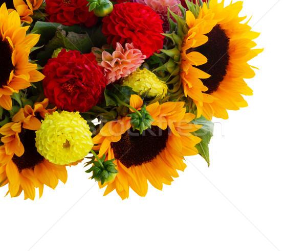 Dália napraforgók keret virágok közelkép izolált Stock fotó © neirfy