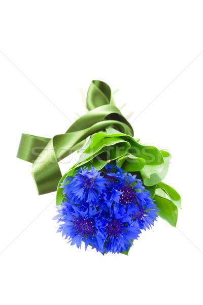 blue corn flowers Stock photo © neirfy