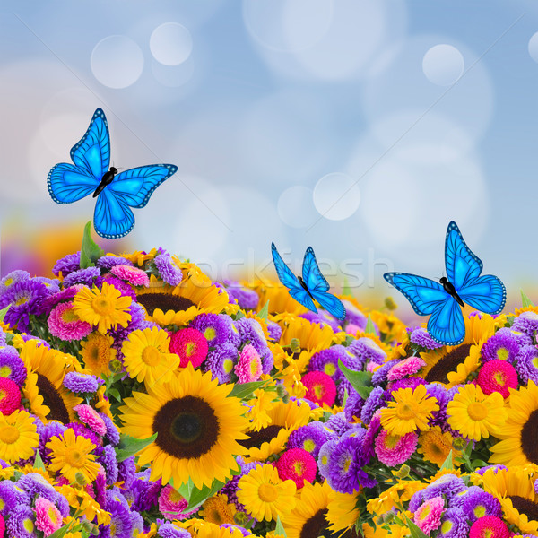 flowers garden with sunflowers and butterflies Stock photo © neirfy
