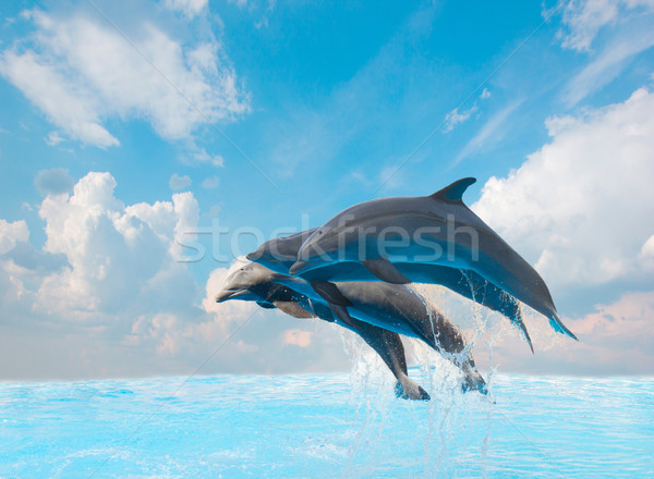 group of jumping dolphins Stock photo © neirfy