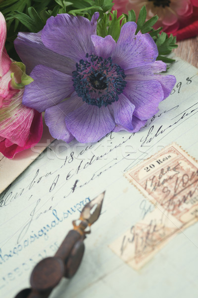 quill pen and antique letters with anemone flowers Stock photo © neirfy