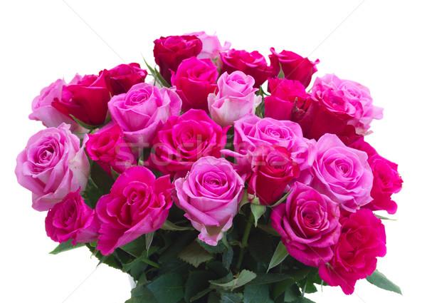 Buquê fresco rosa rosas monte magenta Foto stock © neirfy