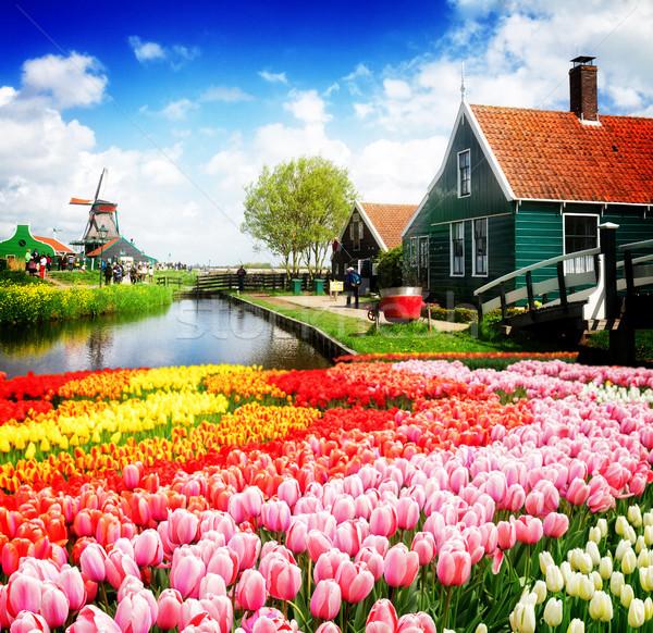 Velho casas Holanda rural holandês cenário Foto stock © neirfy