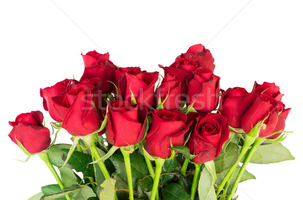 Red blooming roses Stock photo © neirfy