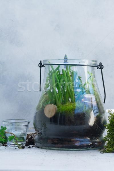 саду внутри каменщик банку Сток-фото © neirfy