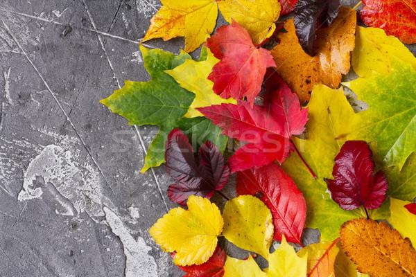 Doğal düşmek yaprakları sınır gri taş Stok fotoğraf © neirfy
