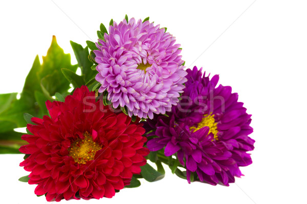 bouquet of aster flowers Stock photo © neirfy