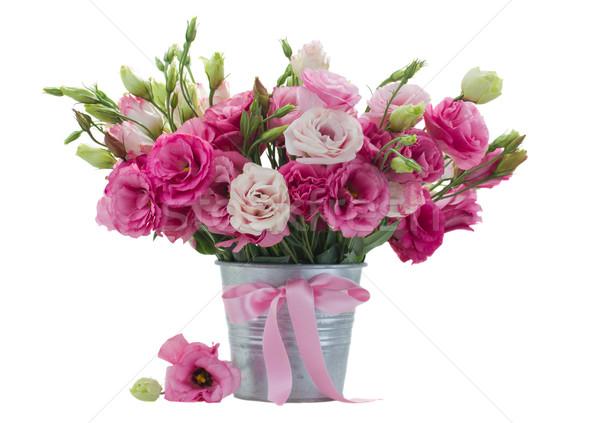 розовый цветочный горшок изолированный белый весны природы Сток-фото © neirfy