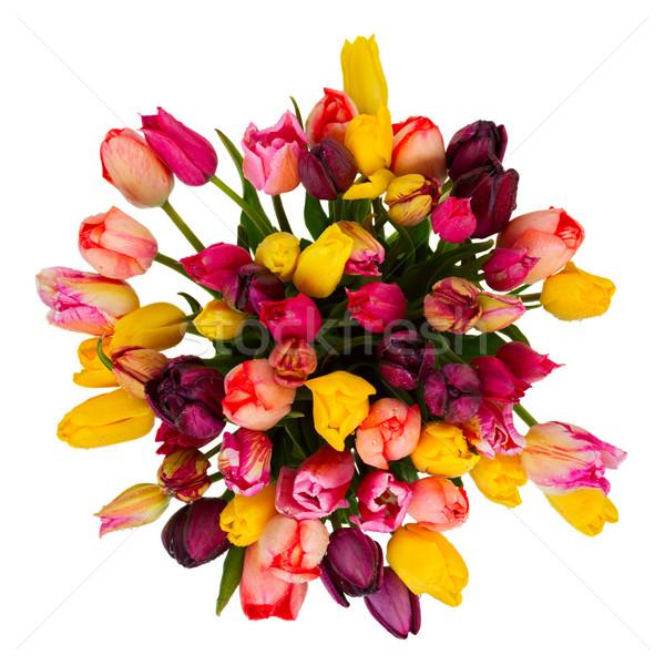 Virágcsokor tulipánok virágok tavasz izolált fehér Stock fotó © neirfy
