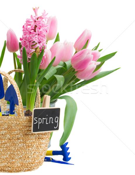 Kerti eszközök jácint tulipánok izolált fehér nyár Stock fotó © neirfy