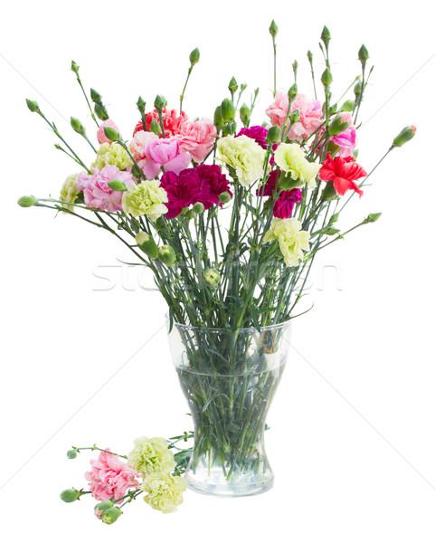 букет гвоздика цветы стекла ваза изолированный Сток-фото © neirfy
