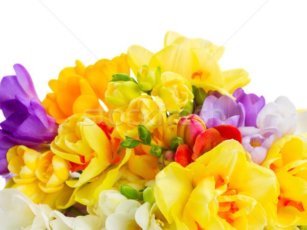 Abrótea flores azul amarelo fronteira isolado Foto stock © neirfy