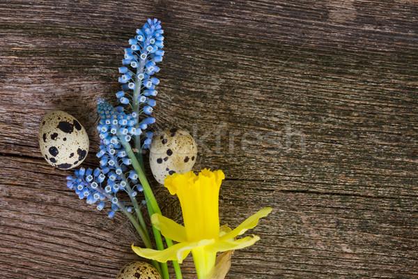 Narcisos ovos abrótea azul flores amarelas Foto stock © neirfy