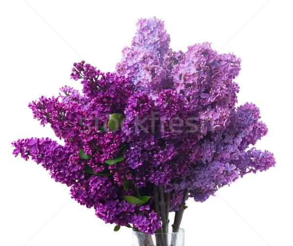 Сток-фото: сирень · цветы · белый · свежие · изолированный