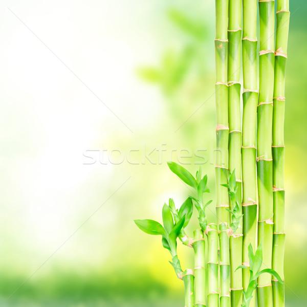 Zöld bambusz bokeh absztrakt terv levél Stock fotó © neirfy