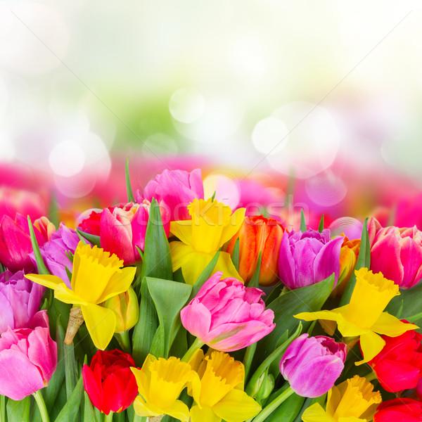 花束 チューリップ 水仙 国境 新鮮な ピンク ストックフォト © neirfy