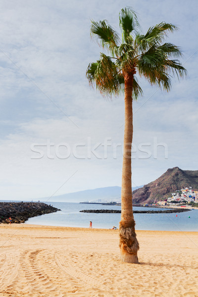 Plaj tenerife İspanya görmek hurma ağacı güneşli Stok fotoğraf © neirfy