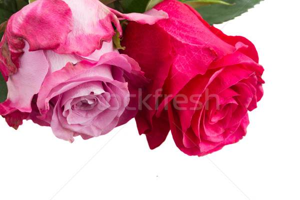Сток-фото: два · розовый · цветы · темно · свет