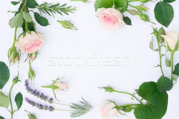 Jardim fresco flores folhas quadro branco Foto stock © neirfy