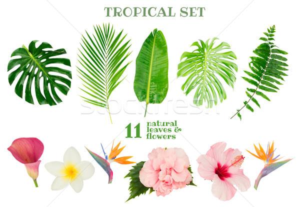 Foto stock: Tropical · folhas · verdes · verde · fresco · folhas · exótico
