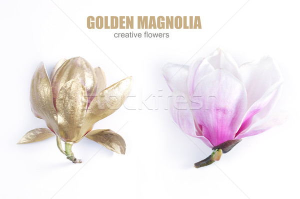 Magnolia fleurs blanche or rose une Photo stock © neirfy
