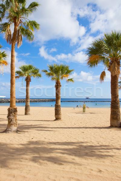 Palms praia tenerife Espanha popular Foto stock © neirfy