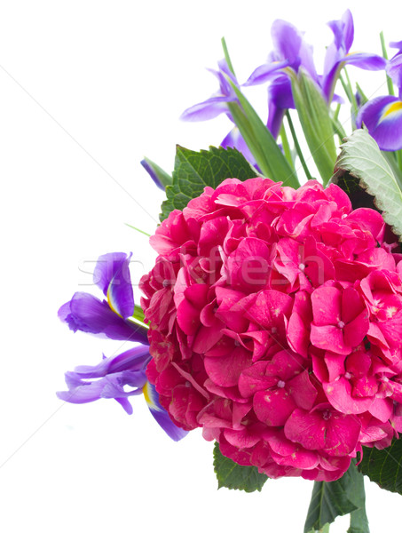 hortensia and iris flowers close up Stock photo © neirfy