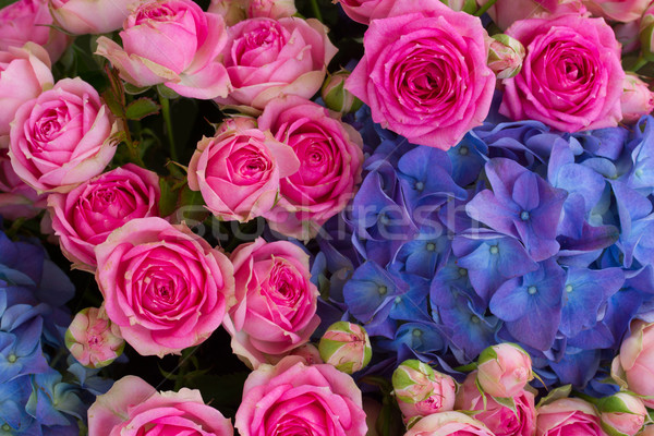 bouquet of pink roses and blue hortensia Stock photo © neirfy